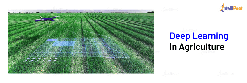 Deep Learning in Agriculture
