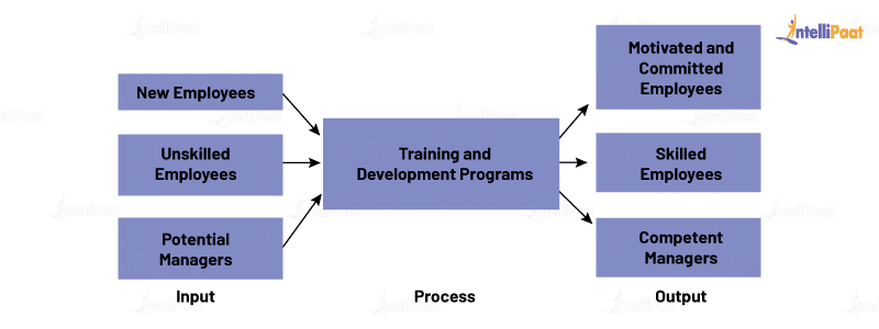 Training and Process and Development