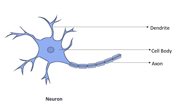 Biological Neural Network vs Artificial Neural Network